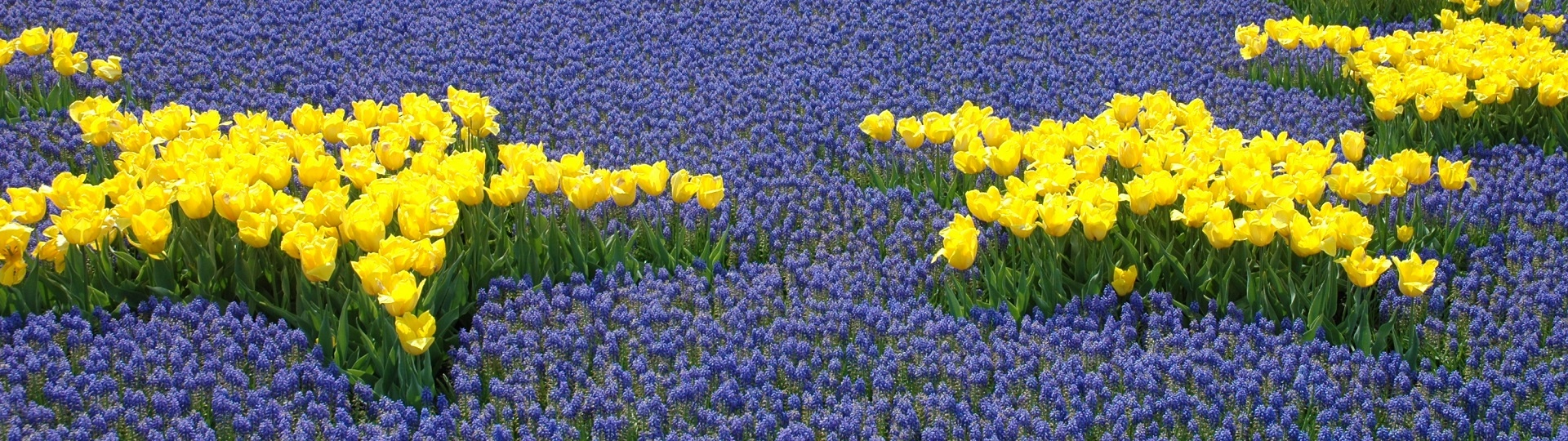 EU_Flowers_Rock_Cohen_1920x540.jpg